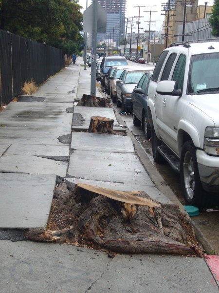 Tree Murders committed on Public Street of LA, no one mourns...