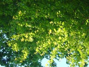 Green Glory of a Backyard in Seattle